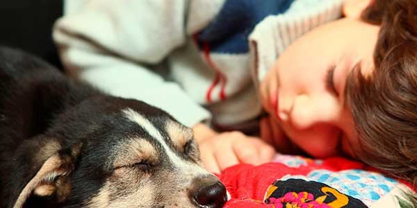 Purificador-de-aire-para-hogares-con-animales